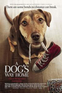Download A Dog's Way Home Movie (2019) || Hindi Dubbed-English || 480p [400MB] | 720p [800MB] || HD BluRay